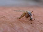 Health officials confirm first West Nile death