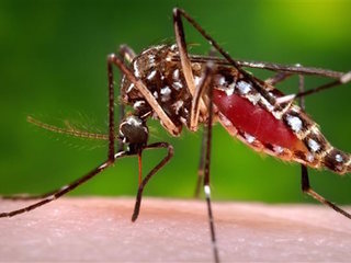 50 cities most at risk for Zika