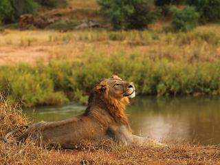Officials unsure why lions escaping Kenyan park