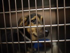 310 pets were adopted from this shelter in a day