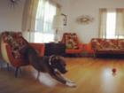 When is pet insurance a good idea?