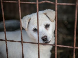 Dogs saved from slaughter in South Korea