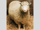 20 years ago, the world met Dolly the sheep