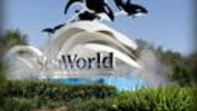 Baby killer whale- the last to be born at SeaWorld- dies