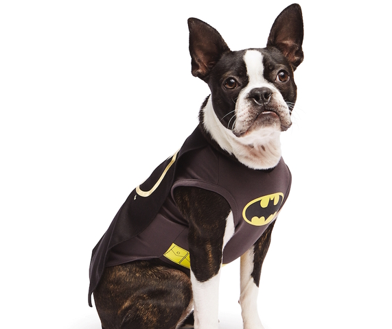 Superheroes dominate top pet Halloween costumes  sc 1 st  ABC15 Arizona : small dog batman costume  - Germanpascual.Com