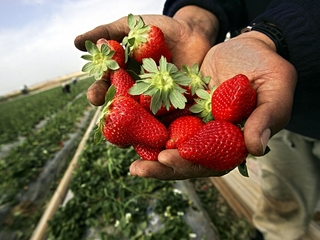 Report warns consumers of pesticides on produce
