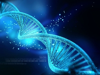 Everything your DNA can tell you