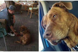 Strangers help man find dog after car crash