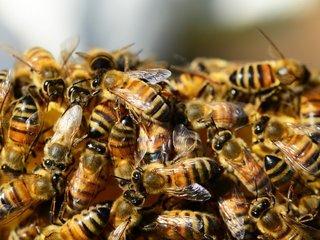 Arizona resort part of 'bee hotel' trend
