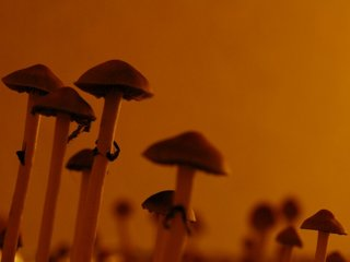 Psychedelics could treat mental illness