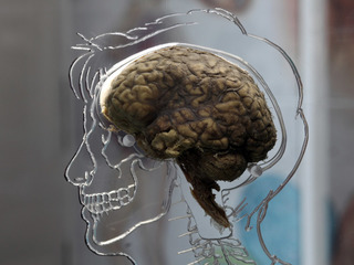 Spit test may diagnose concussions in children