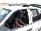 Puppy with heart defect named K9 for a day