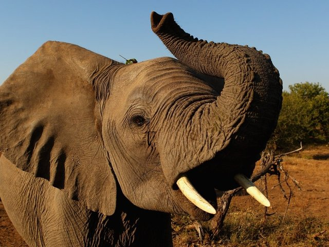 Trump administration to allow elephant trophy imports on 'case-by-case basis'