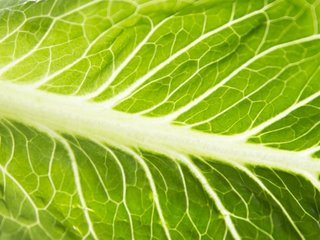 Is it safe to eat romaine lettuce again?