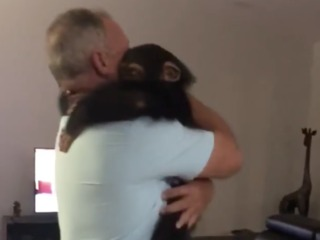 Video: Chimp gets visit from foster family